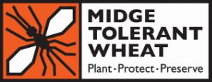 Midge Tolerant Wheat